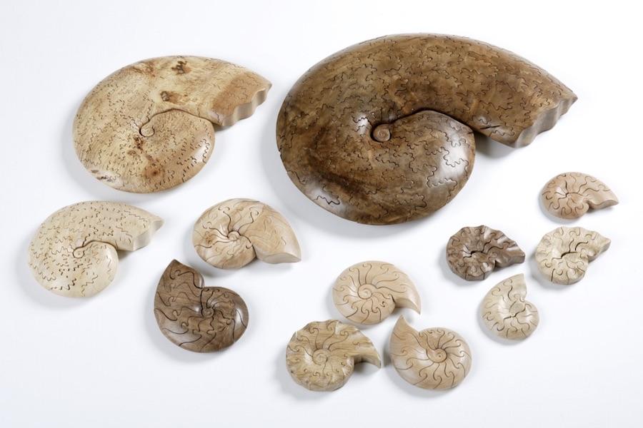 1.Ammonites