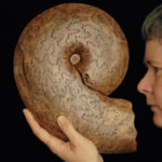6.Large Ammonite Suture 1